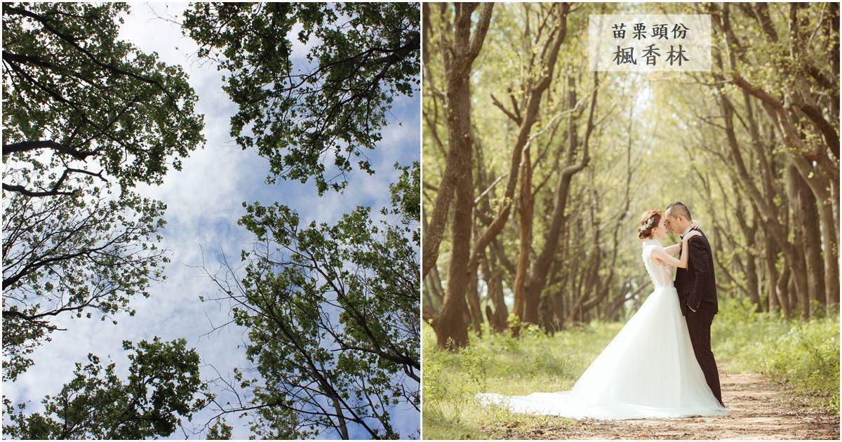 苗栗頭份旅遊景點|適合外拍的大自然美景『頭份後花園-楓香林』(文內有婚紗照參考)
